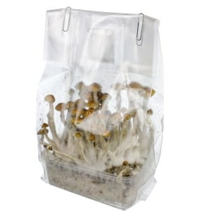 magic mushrooms growbox growkit